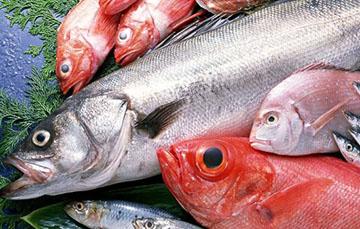 морская рыба жирных сортов